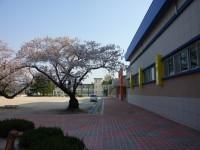69_yeongokelementaryschool-1-99.jpg